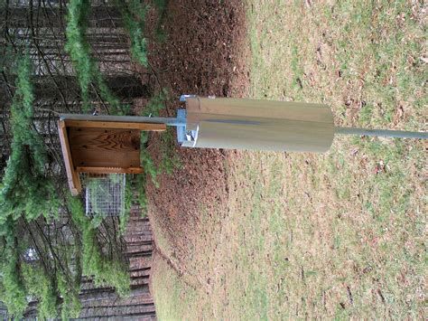 home made squirrel baffle homesteading forum