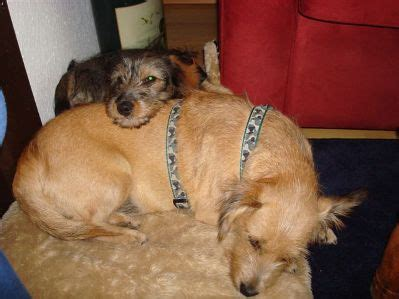 Sehr Dünne Bettdecke by Hundefamilie Riva Haustiersuche At