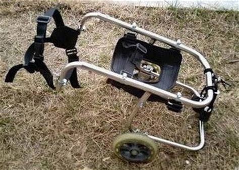 wheelchair for back legs carts for back legs breeds picture