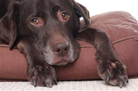 sick puppy symptoms symptoms of a sick