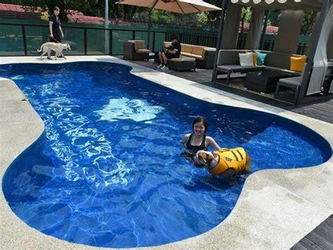 layout de hotel para cachorro hotel de luxo para c 227 es tem piscina em forma de osso