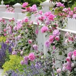 pagar tanaman  jelita kumpulan artikel tips
