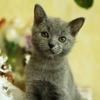 alimentazione forzata gatto alimentazione forzata gatto tanta pazienza e buona