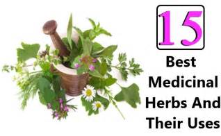 15 best medicinal herbs and their uses diy home remedies