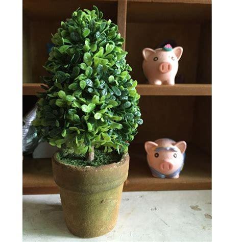 piante di interno piante per interno il verde in ufficio florpagano di