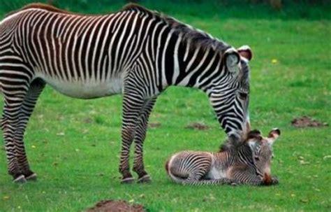 imagenes de animales la selva animales de la selva informacion sobre animales