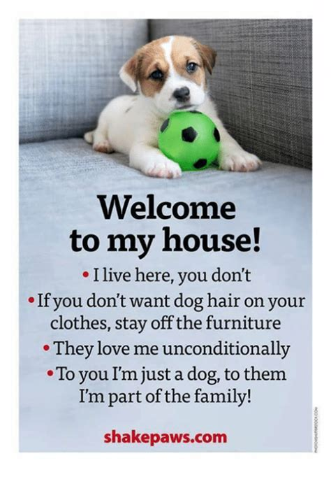 welcome to my house rules dog 25 best memes about welcome to my house welcome to my