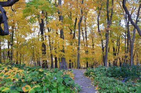 Lewis Landscape Arboretum Address Provided By Minnesota Landscape Arboretum Bild Fr 229 N