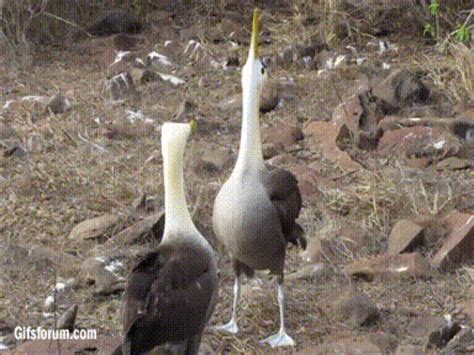 love is in the air 4 birds with incredible mating rituals
