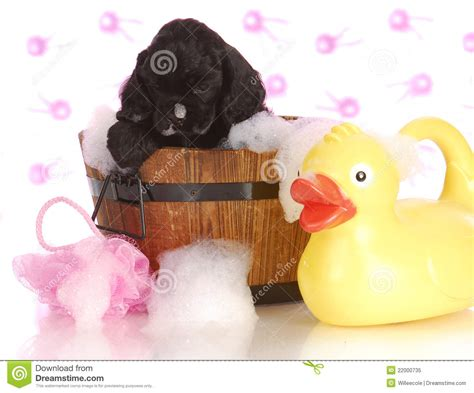 puppy bath time puppy bath time royalty free stock photo image 22000735