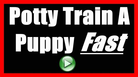 dog wont stop pooping in house how to potty train a puppy to not poop indoors house train a puppy to go outside youtube
