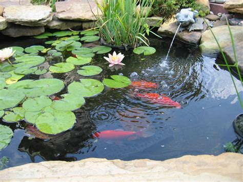 backyard fish pond decor references