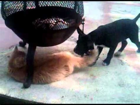 puppy crush crush puppy w wayt