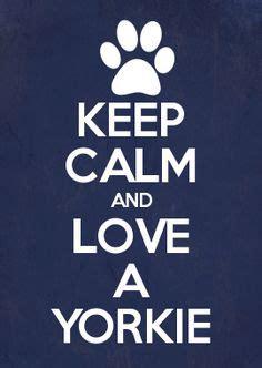 when do yorkie puppies calm yorkie