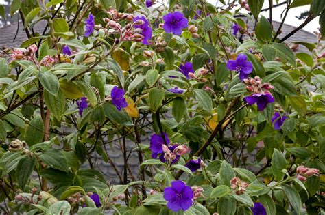 plant with purple flowers flowering plant clippix etc educational photos for