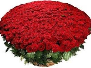 красивый букет из алых роз фото