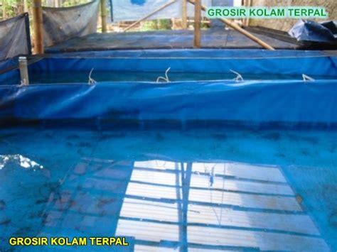 Bibit Lele Di Banda Aceh budidaya lele kolam terpal agro terpal