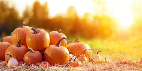 pumpkin quotes  puns funny sayings  pumpkins