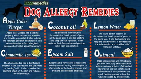 what to use on dogs skin 25 best ideas about remedies for allergies on seasonal allergy