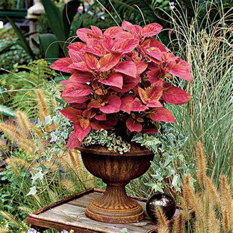 southern living container gardening frame colorful plants with a textured background these