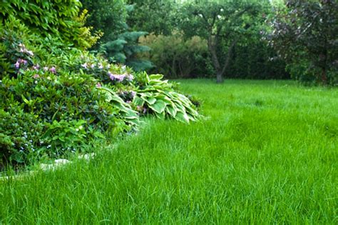 Course On Lawns What You Should by Lawn Top Dressing How To Keep The Lawn Unharmed