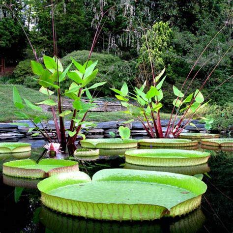 10 best ideas about p duke gardens duke