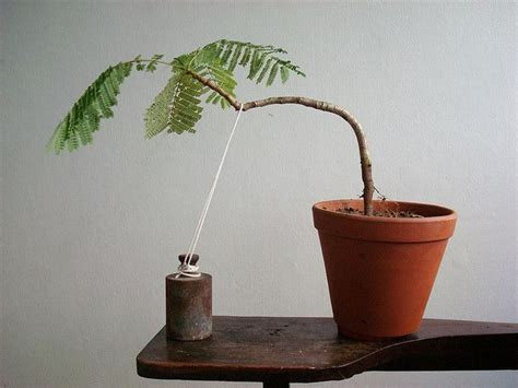 how to care for a tree at home best 25 bonsai trees ideas on bonsai bonsai