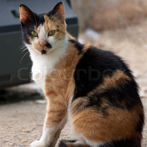 Dijamin Clear St Kitties cat sitting on a stock photo colourbox