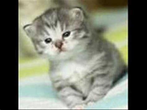 imagenes de animales bonitos gatos bonitos y graciosos youtube