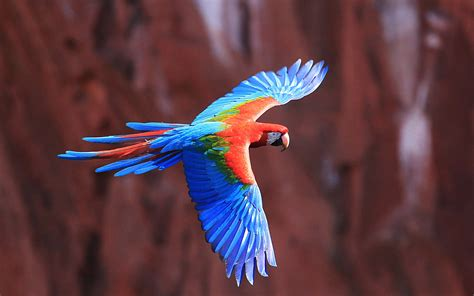 colorful bird pictures colorful birds flying weneedfun