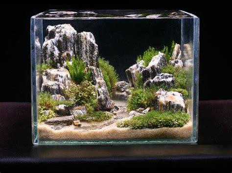 arredare un acquario come allestire un acquario d acqua dolce acquariofilia
