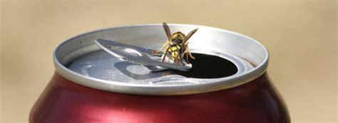 wespen im haus was tun 6753 hausmittel und erste hilfe bei wespenstichen rentokil