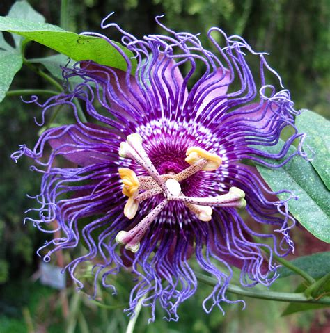 flora und botanischer garten k 246 ln botanic garden in - Flora Garten