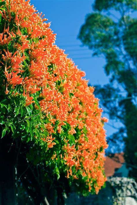 Flower Food Diy by Best Climbing Plants Burke S Backyard