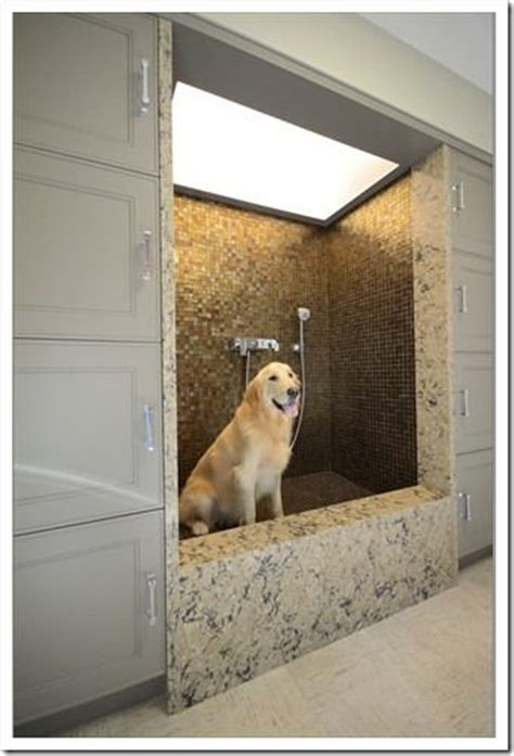 raised dog bathtub best 25 dog shower ideas on pinterest wash room
