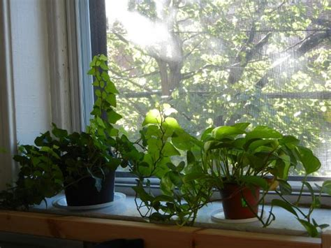 Window Sill Greenhouse Inspiration Garden Design 74006 Garden Inspiration Ideas