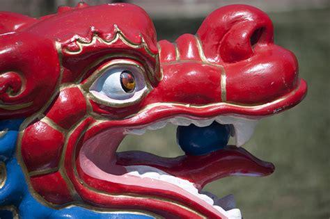 dragon boat racing pickering dragon boat festival 2010 flickr photo sharing