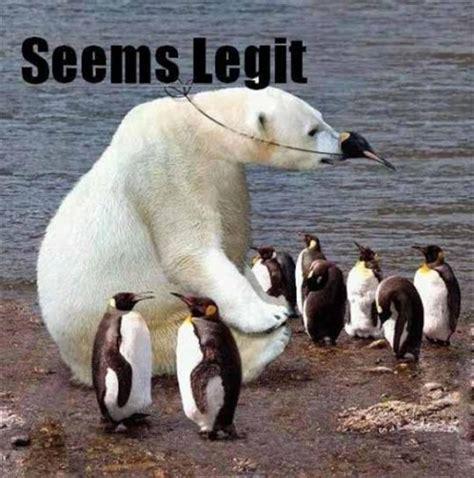Cute Penguin Meme - medical practice blog social media reputation management