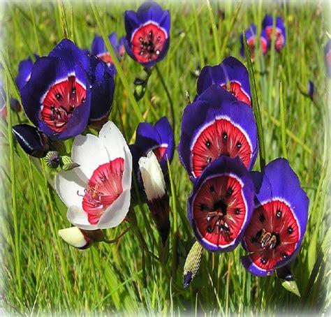 imagenes para fondo de pantalla romanticas fotos de las flores mas bonitas para tu whatsapp las