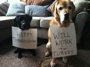dogs at thanksgiving 11 thanksgiving staples that are hazardous to pups barkpost