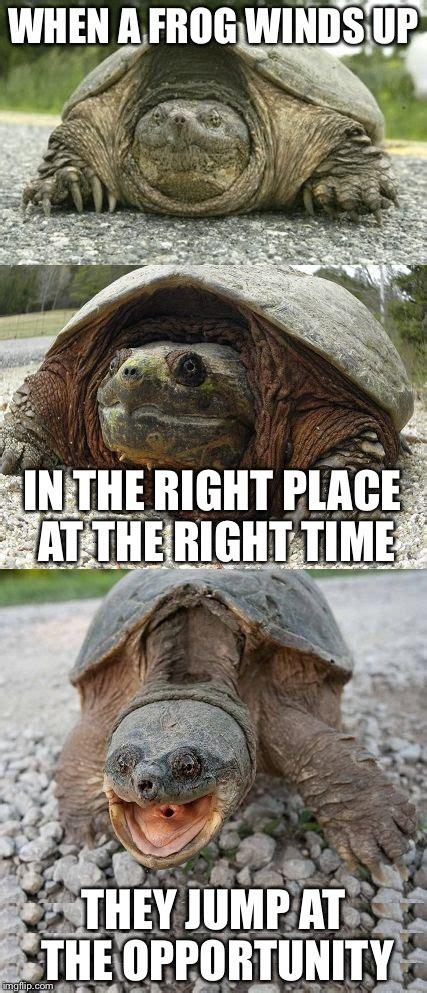 Tortoise Meme - bad pun tortoise imgflip
