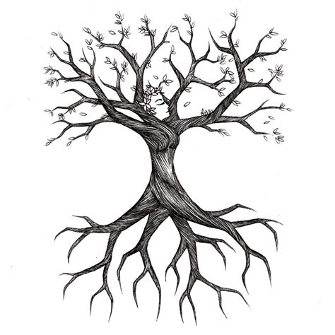 simple drawing tree tree root drawings clipart best