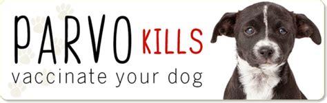 can cats get parvo from dogs parvovirus armidale vet hill vet butler veterinary surgery dogs cats