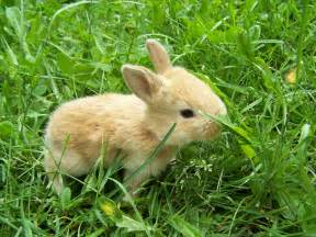 rabbit bunny central wallpaper rabbits hd wallpapers