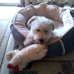 Lost Dog & Cat Rescue Foundation | Arlington, VA Lost Dog Rescue Arlington