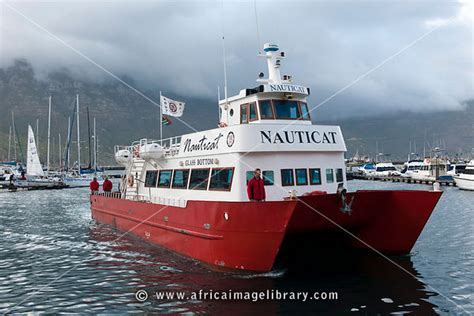 glass bottom boat cape town photos and pictures of seal island boat trip hout bay