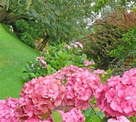 piante x giardino piante per giardino piante da giardino scegliere le