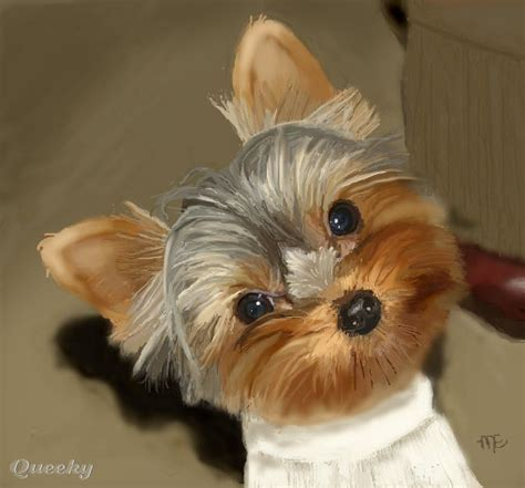 how to a yorkie to outside how to draw yorkies