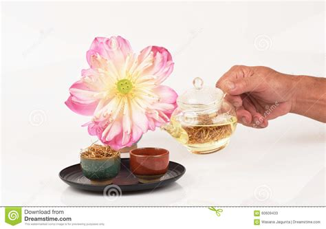 pink lotus stamen lotus stamen tea stock photo image 60609433