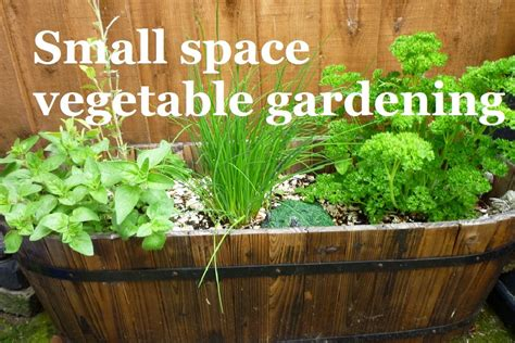Small space vegetable gardening ? A series about